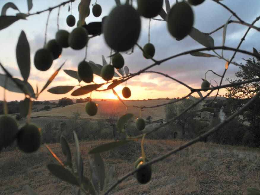 CENTO – Huile d'olive 100% extra vierge de Toscane